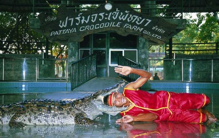 Крокодиловая ферма в Паттайе или Парк миллионолетних камней
