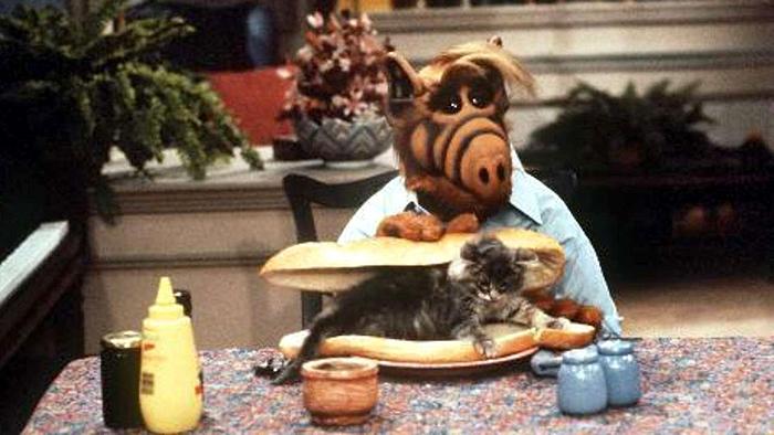 Ежегодно в Швейцарии съедают 200 килограммов кошек. Кошачьего мяса. Да, в Швейцарии