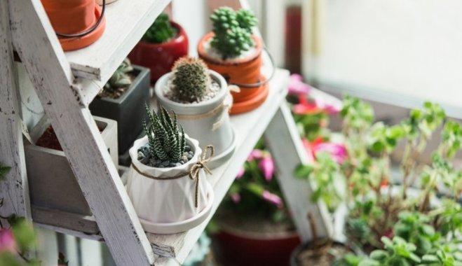 Лунный календарь комнатных растений на январь 2018 года