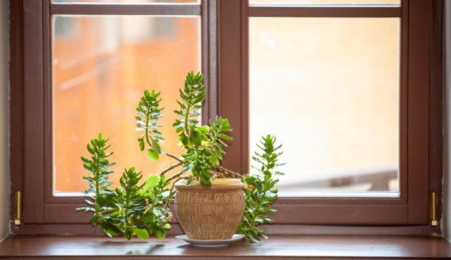 """Зеленая реанимация: 6 способов оживить растение """"при смерти"""""""