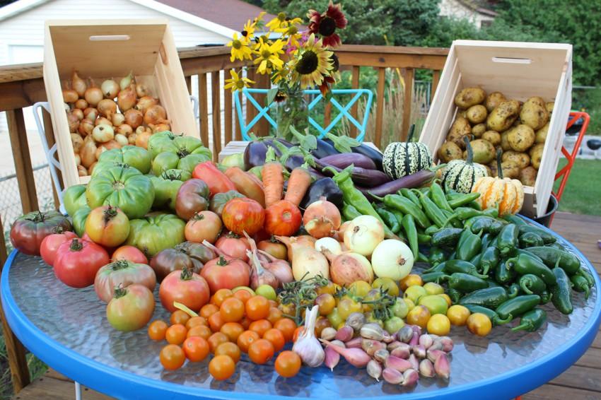 Как вырастить хороший урожай в 2017 году: летние работы в саду и огороде