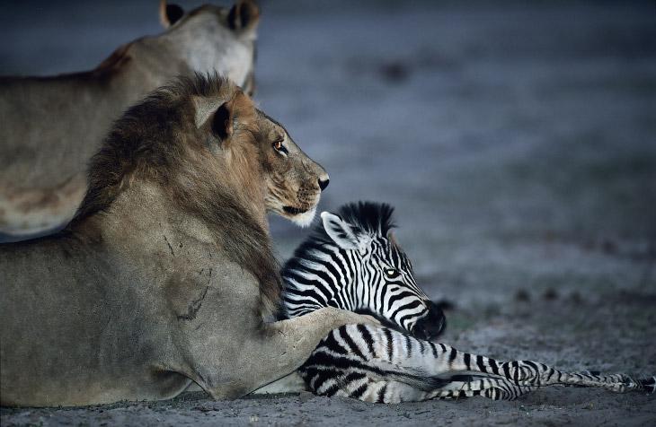 Удивительные примеры поведения животных