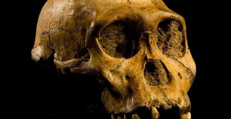 Генетики назвали человека «ошибкой природы»