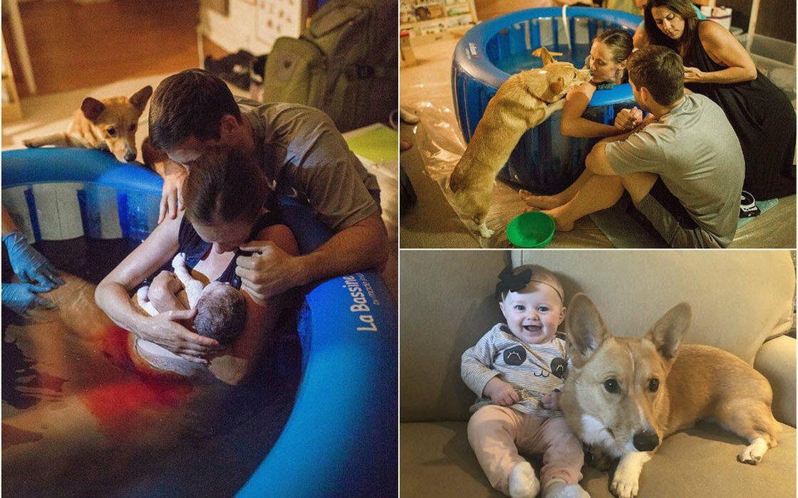 Преданная собака присутствовала на всех этапах домашних родов хозяйки