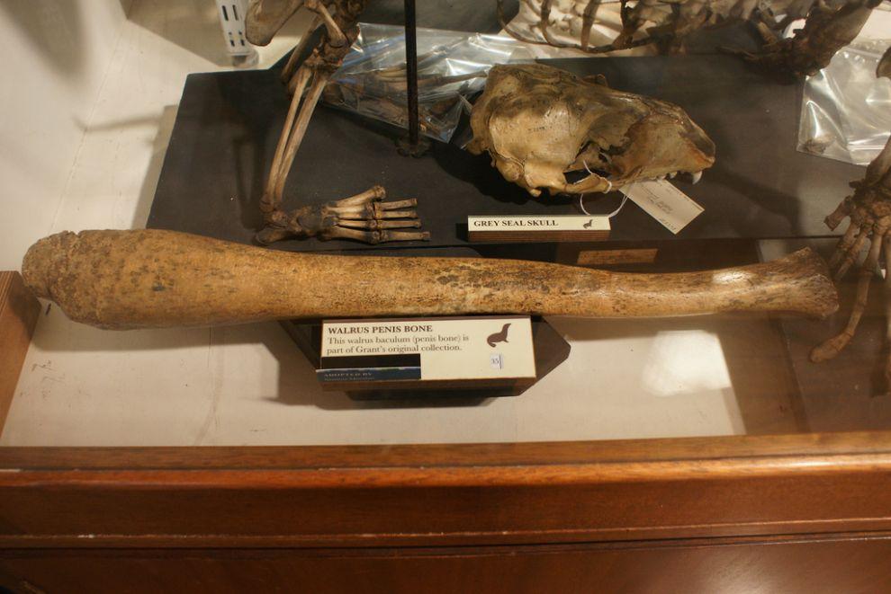 gmoz19 Лондонский музей зоологии и сравнительной анатомии Гранта