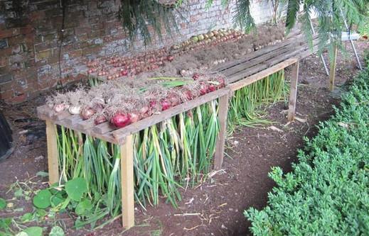 9 практичных советов для садоводов