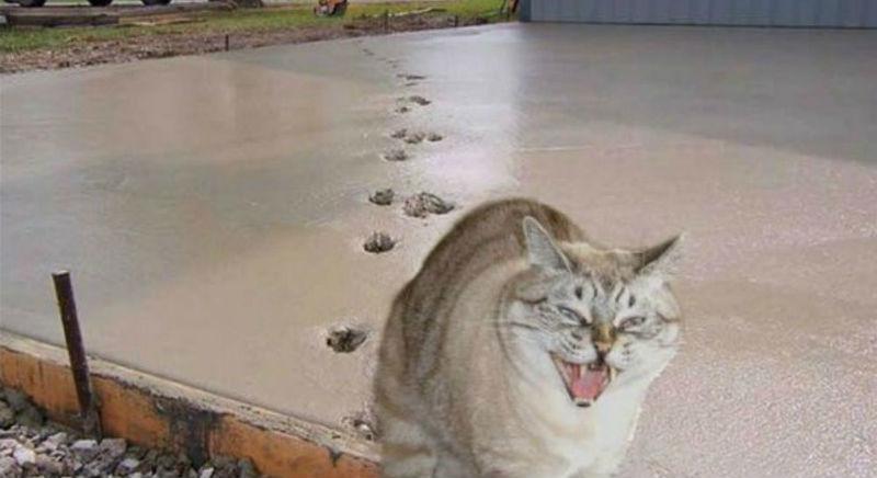 Как кошки в истории наследили