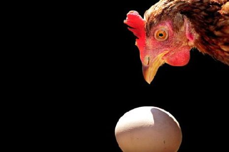 Кто появился раньше — курица…