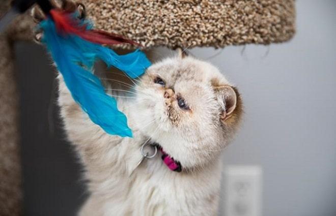 После вмешательства врачей кошка стала настоящей красавицей, и вскоре ею заинтересовалась добрая женщина