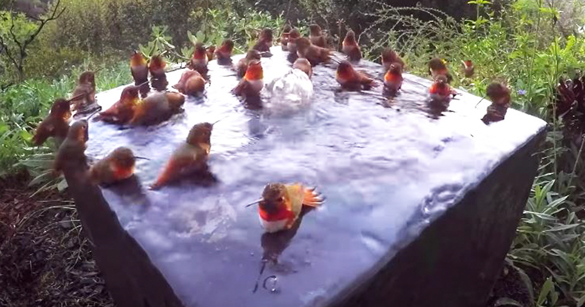 These 30 Hummingbirds Just Had An Epic Pool Party
