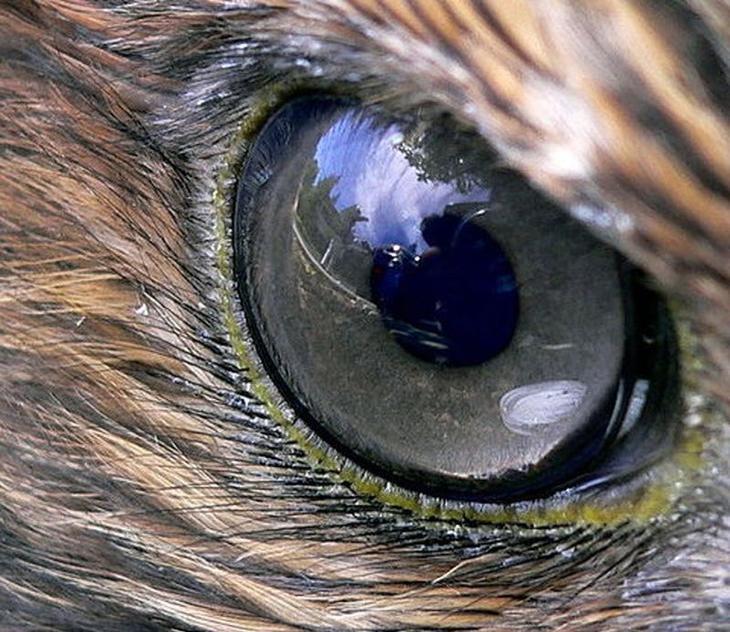 Уникальные способности животных, которые отсутствуют у людей