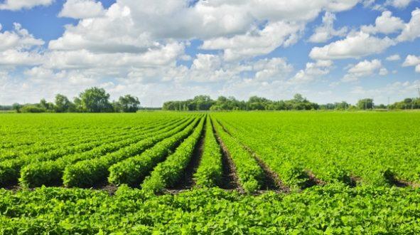 Неожиданный победитель американо-китайского торгового конфликта: российские фермеры, выращивающие сою