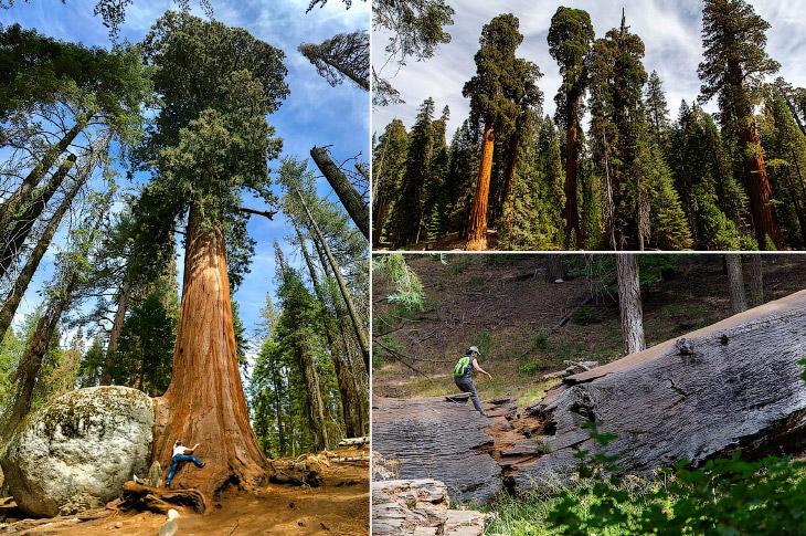 Деревья-гиганты мира