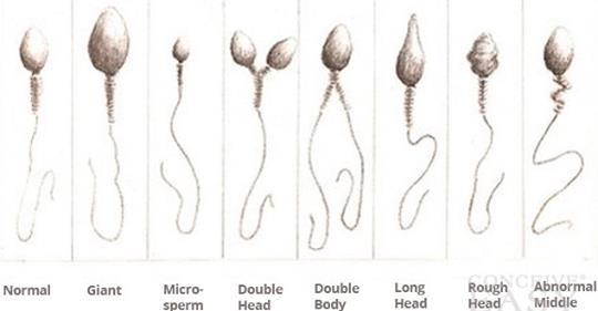 10 фактов, которых вы не знали о сперме