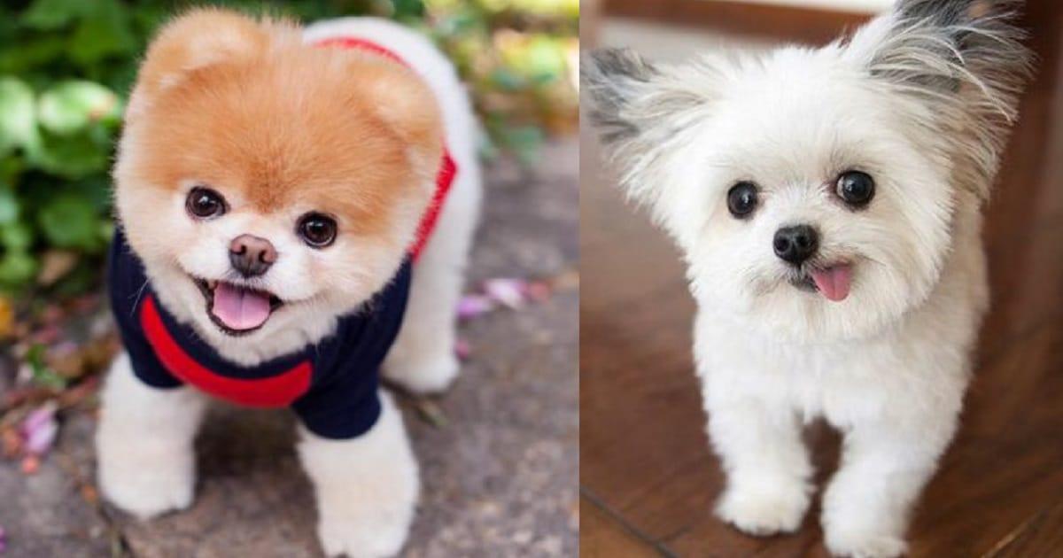 Звезды Интернета: 10 самых популярных собачек, завоевавших любовь по всему миру