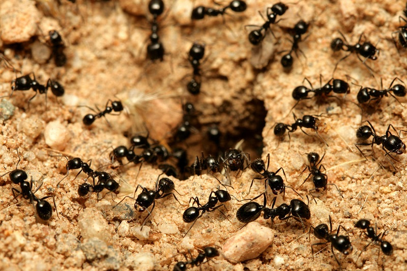 муравьиная горка