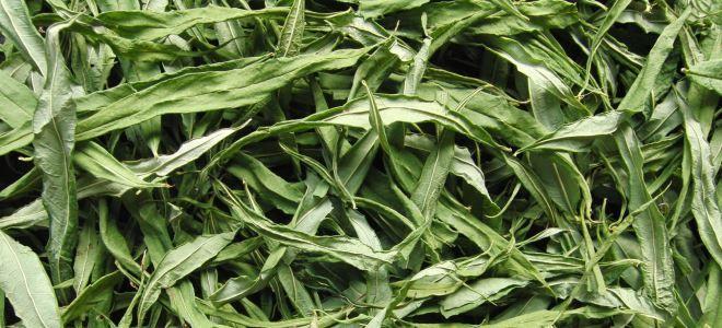 листья кипрея