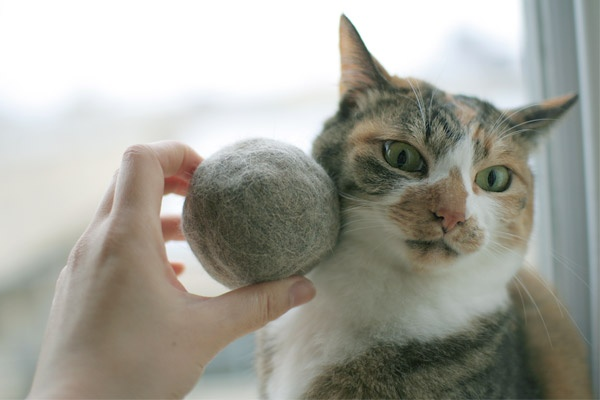 У кошки выпадает шерсть: определяем причины и способы лечения .