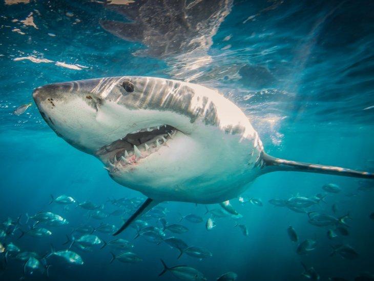 10 животных, которые не так опасны, как вы думаете