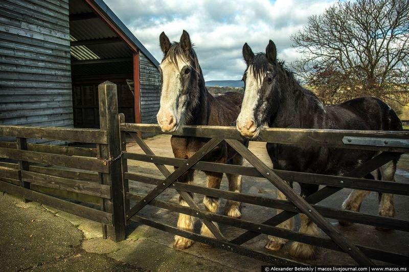 Дом престарелых лошадей