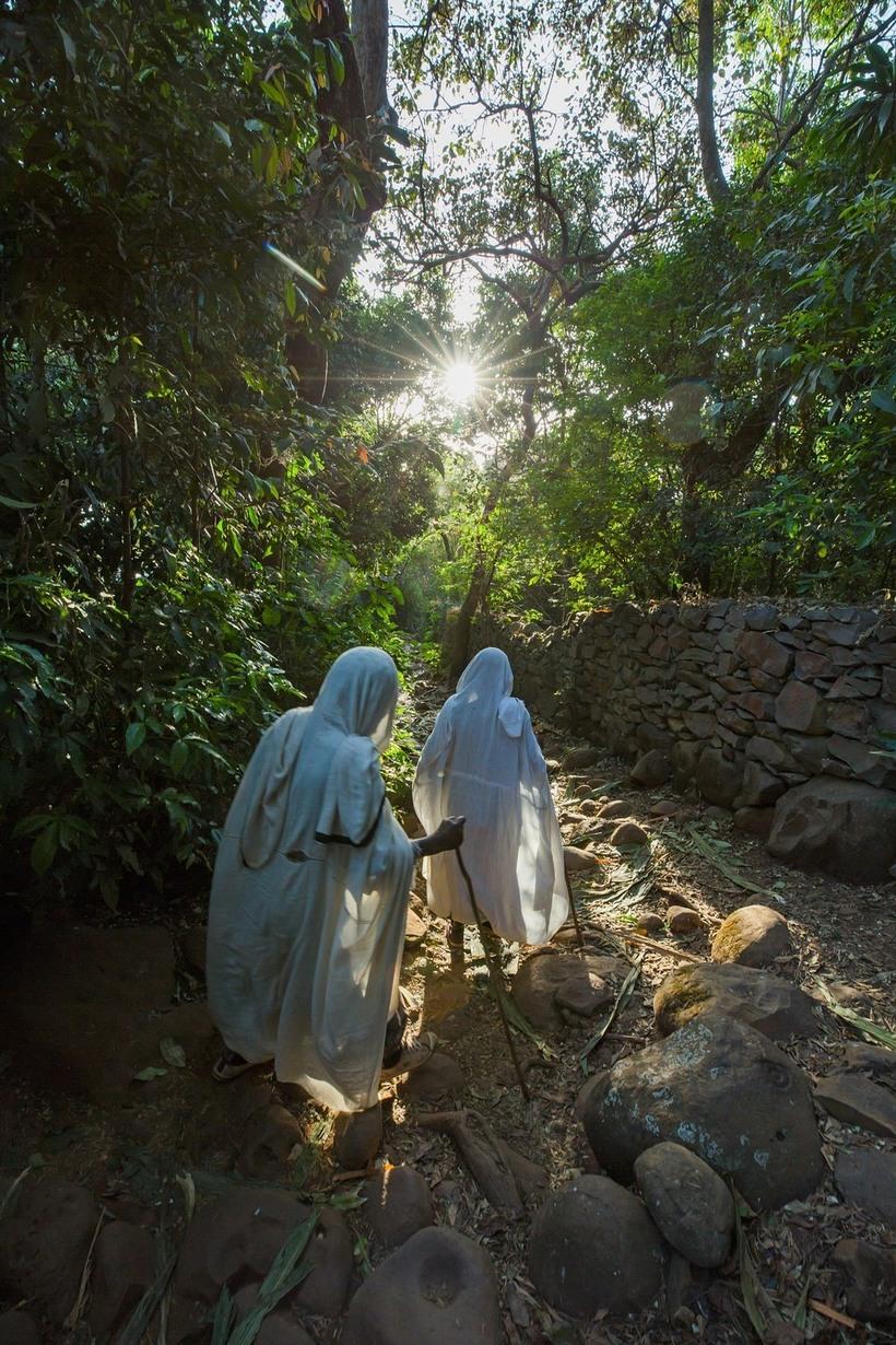 Тысячи оазисов среди пустыни: церковные леса Эфиопии