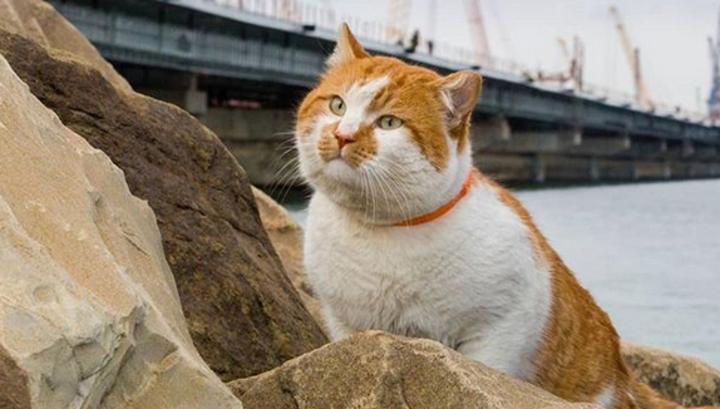 Washington Post считает, что главной звездой Крымского моста стал кот