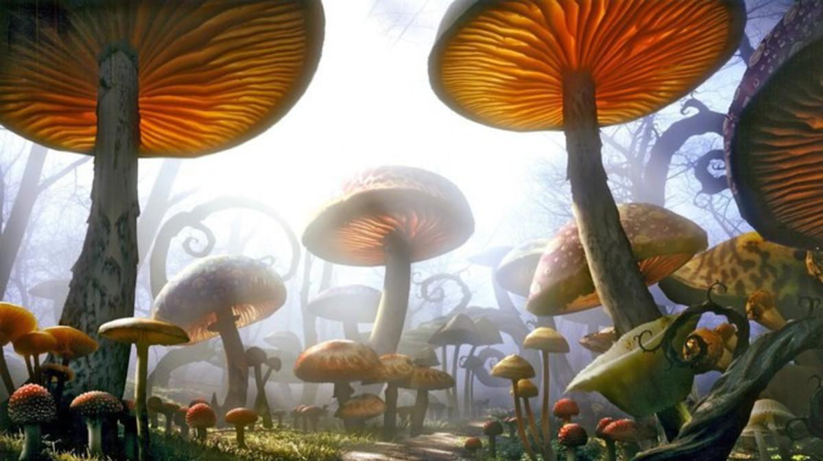 Найдены самые древние грибы на Земле