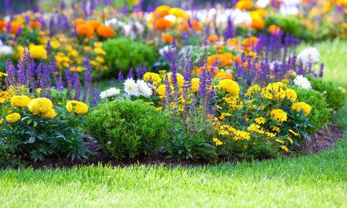 Посадка цветов осенью, в чем плюсы?
