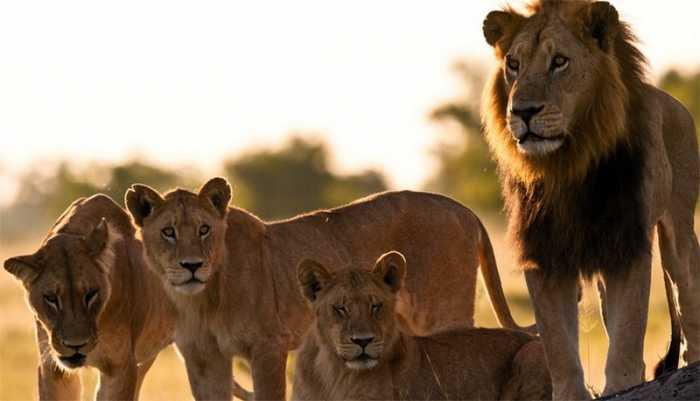 Самые известные животные-людоеды