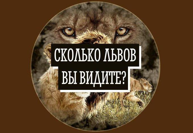 Немногие могут рассмотреть на этом изображении всех львов