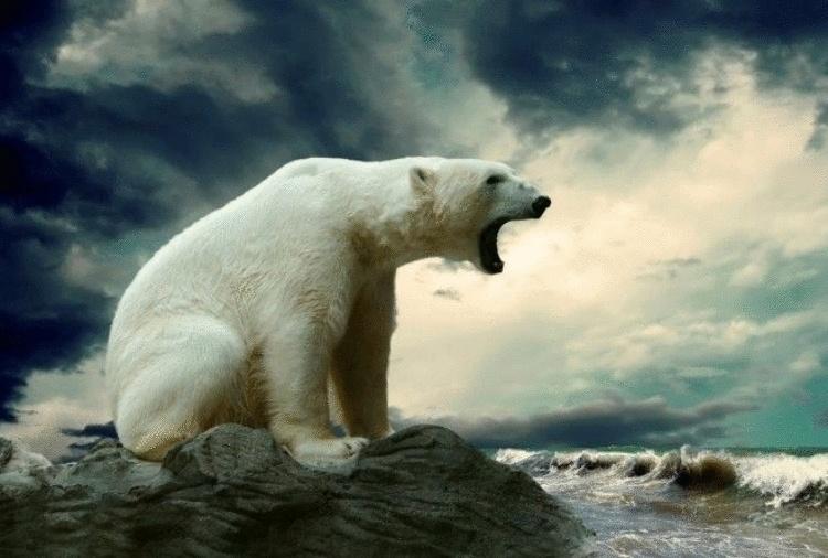 20 любопытных фактов об Антарктиде