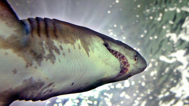 Британец проплыл семь километров, спасаясь от акулы