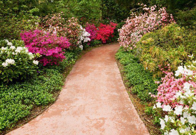 Низкорослые декоративные кустарники для альпинария и небольшого сада