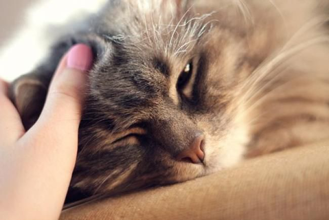 Почему кошка мурлыкает когда берешь на руки