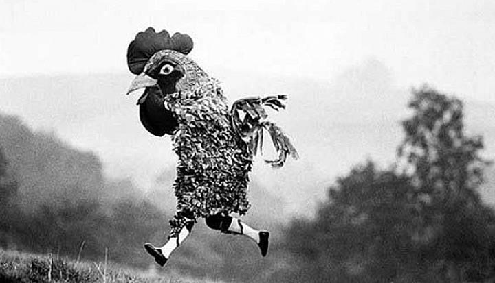 Почему курицы перешли дорогу