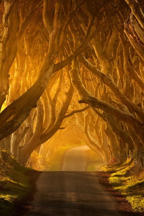 Буковая аллея в графстве Антрим Северной Ирландии. Фото