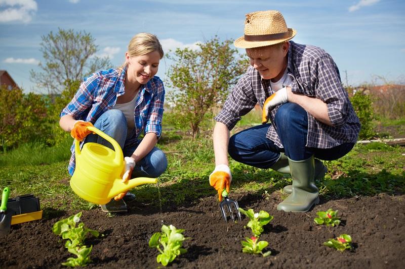 Золотые правила весенней посадки растений