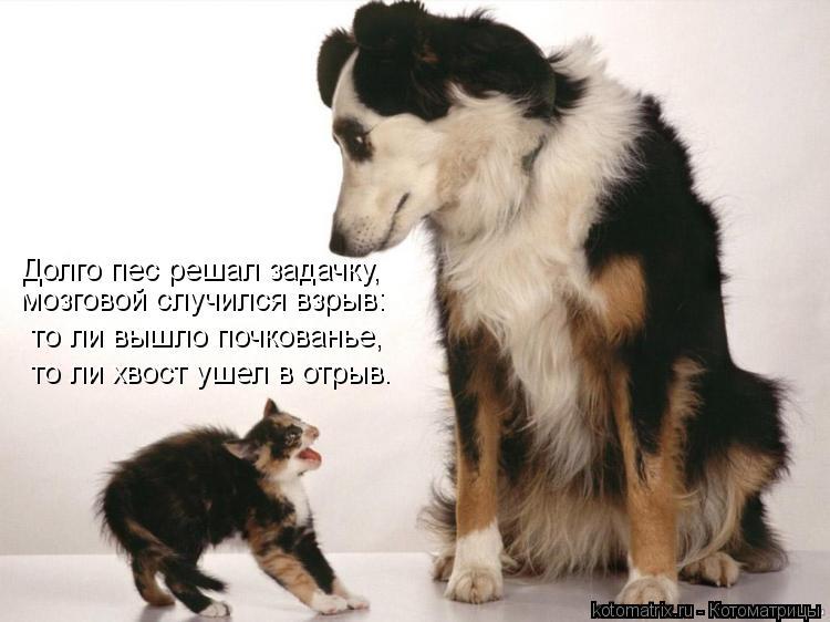 Котоматрица: Долго пес решал задачку, то ли вышло почкованье, то ли хвост ушел в отрыв. мозговой случился взрыв: