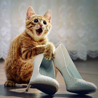 КОШКИН ДОМ. Почему коты метят территорию