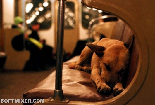 Удивительные факты о собаках