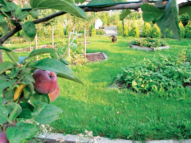 Декоративный фруктовый сад: и польза, и удовольствие