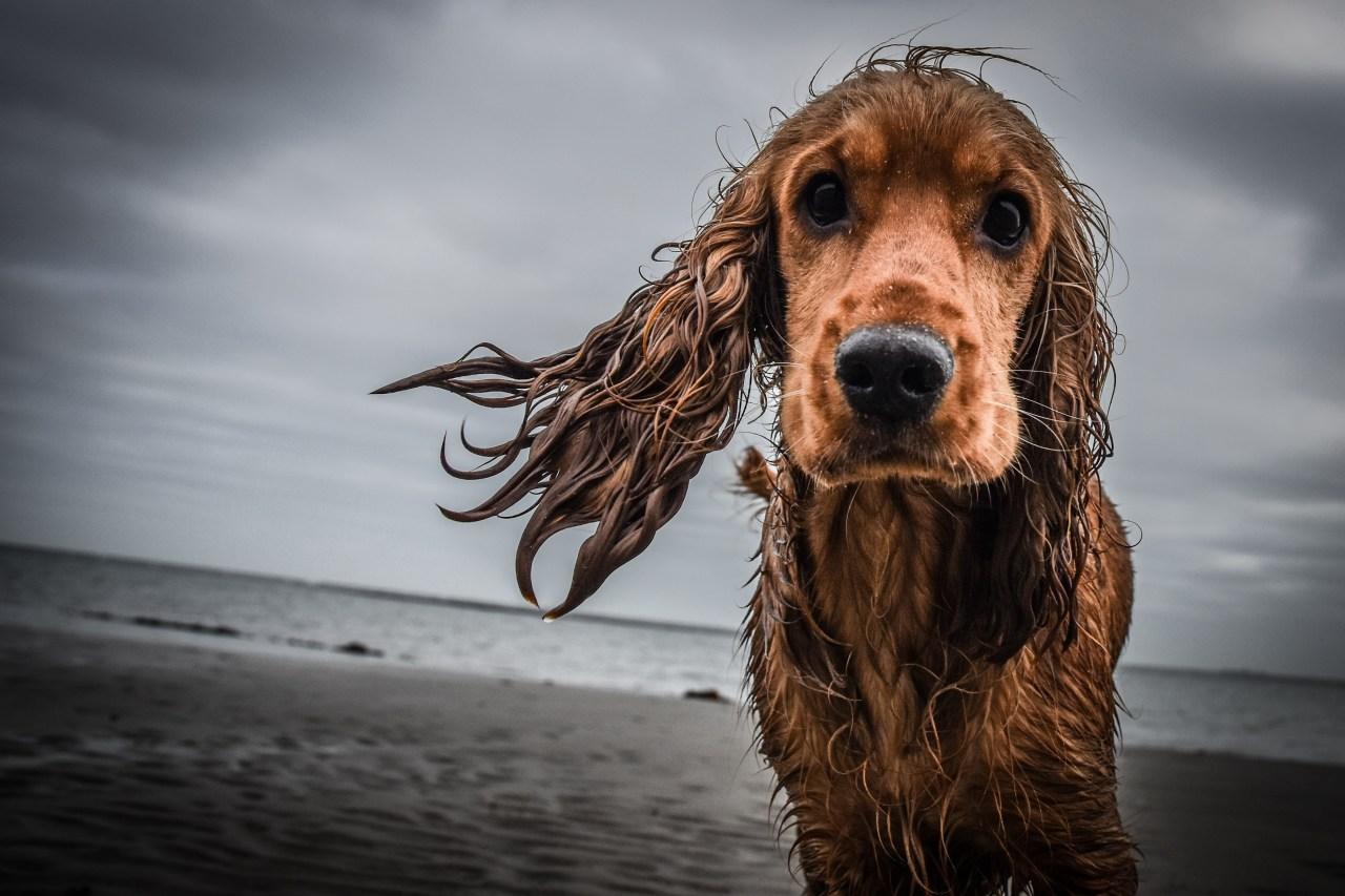 Думаете Вы более красивый когда мокрый?))