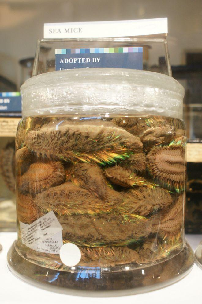 gmoz15 Лондонский музей зоологии и сравнительной анатомии Гранта