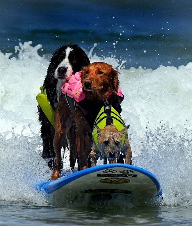 Мокрые мордашки: 10 забавных фотографий животных, которые оказались в воде!