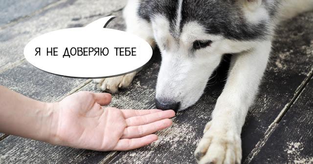 Собаки могут распознавать пл…