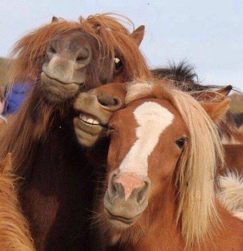 Картинки для настроения ч.6: фото приколы с людьми и животными