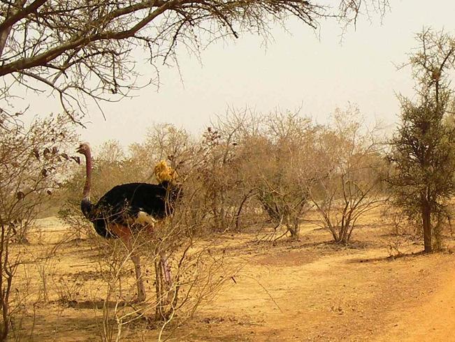 Буркина-Фасо — знаменитые достопримечательности