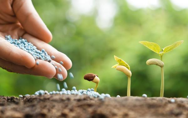 Минеральные удобрения — залог больших урожаев
