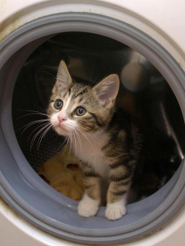 Любопытство едва не сгубило кошку: две истории о выживших мурлыках