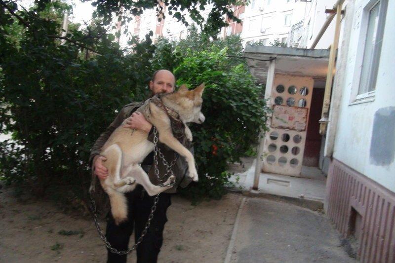 Волгоградец приютил у себя дома волка из Астраханской области